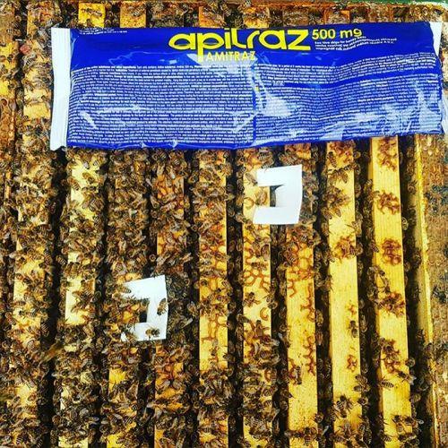 Apitraz Strips Varroa Treatment