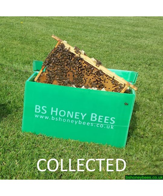 Collected 5 Frame Nucleus of Bees in Correx Transport Box