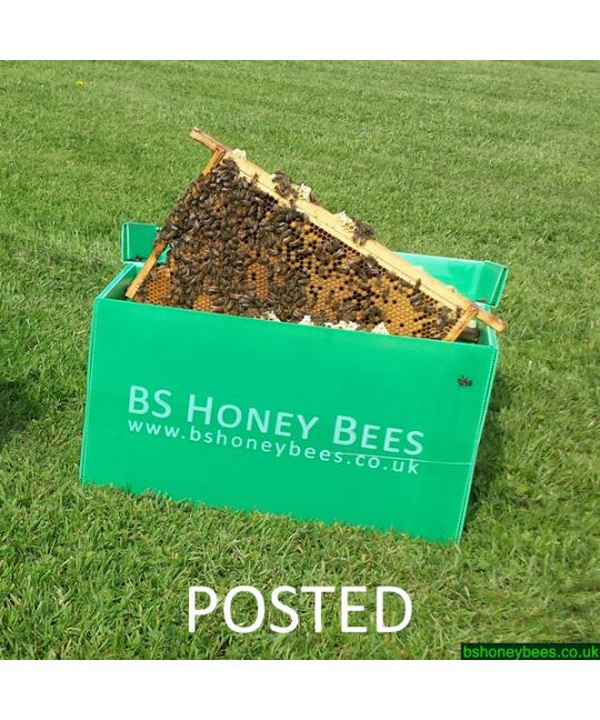 Posted 5 Frame Nucleus of Bees in Correx Transport Box